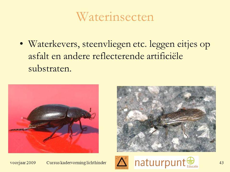 voorjaar 2009 Cursus kadervorming lichthinder 43 Waterinsecten Waterkevers, steenvliegen etc.