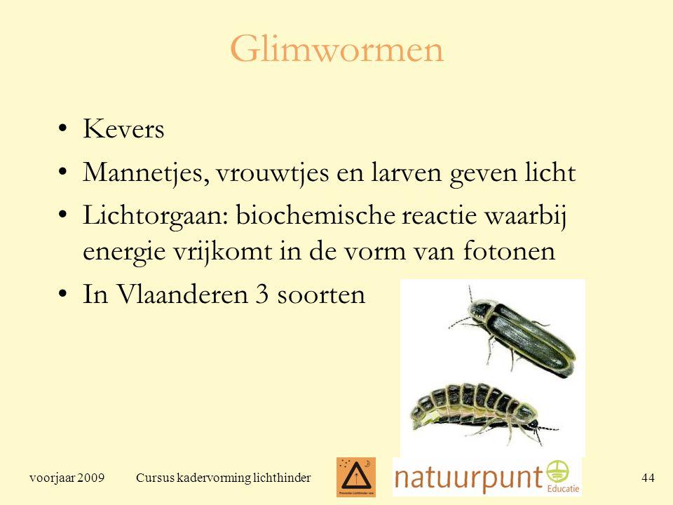 voorjaar 2009 Cursus kadervorming lichthinder 44 Glimwormen Kevers Mannetjes, vrouwtjes en larven geven licht Lichtorgaan: biochemische reactie waarbij energie vrijkomt in de vorm van fotonen In Vlaanderen 3 soorten