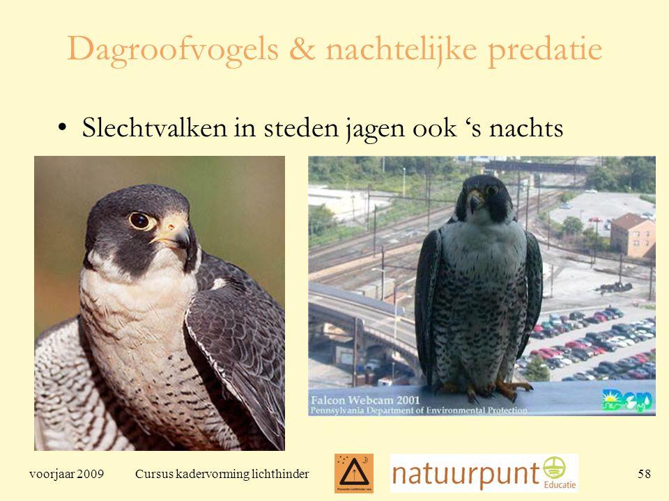 voorjaar 2009 Cursus kadervorming lichthinder 58 Dagroofvogels & nachtelijke predatie Slechtvalken in steden jagen ook 's nachts