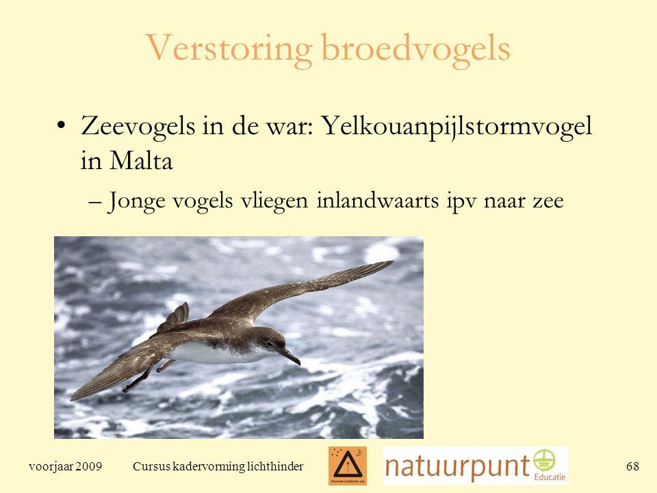 voorjaar 2009 Cursus kadervorming lichthinder 68 Verstoring broedvogels Zeevogels in de war: Yelkouanpijlstormvogel in Malta –Jonge vogels vliegen inlandwaarts ipv naar zee