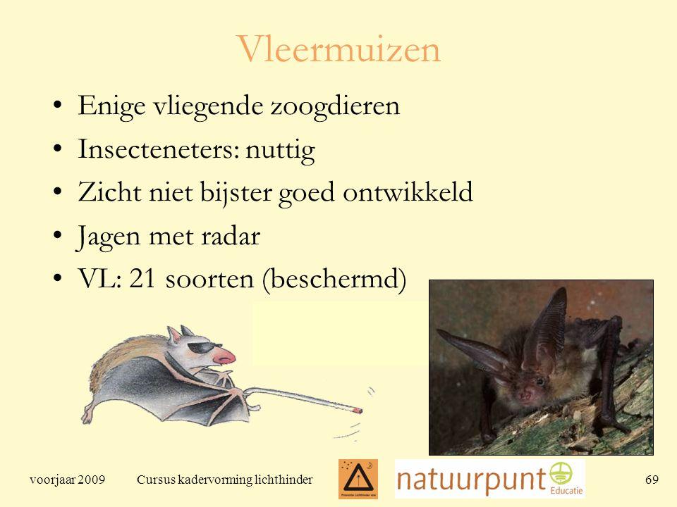 voorjaar 2009 Cursus kadervorming lichthinder 69 Vleermuizen Enige vliegende zoogdieren Insecteneters: nuttig Zicht niet bijster goed ontwikkeld Jagen met radar VL: 21 soorten (beschermd)