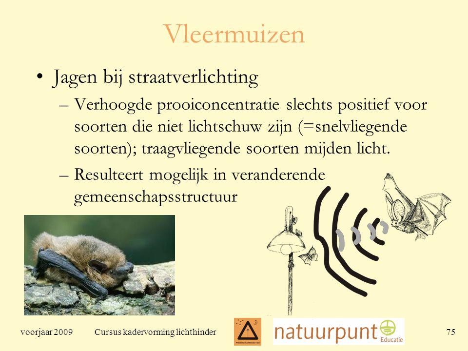 voorjaar 2009 Cursus kadervorming lichthinder 75 Vleermuizen Jagen bij straatverlichting –Verhoogde prooiconcentratie slechts positief voor soorten die niet lichtschuw zijn (=snelvliegende soorten); traagvliegende soorten mijden licht.