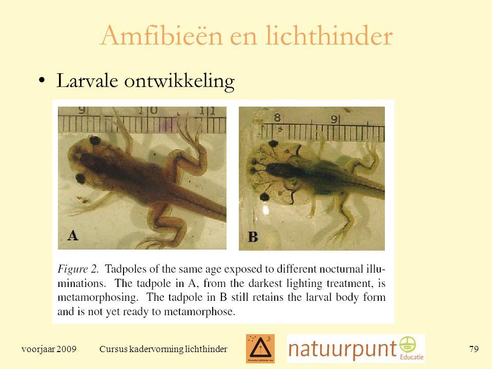 voorjaar 2009 Cursus kadervorming lichthinder 79 Amfibieën en lichthinder Larvale ontwikkeling