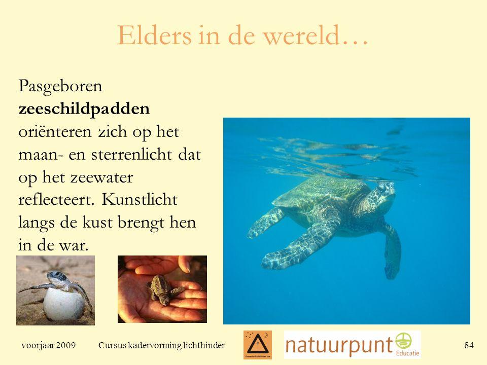 voorjaar 2009 Cursus kadervorming lichthinder 84 Elders in de wereld… Pasgeboren zeeschildpadden oriënteren zich op het maan- en sterrenlicht dat op het zeewater reflecteert.