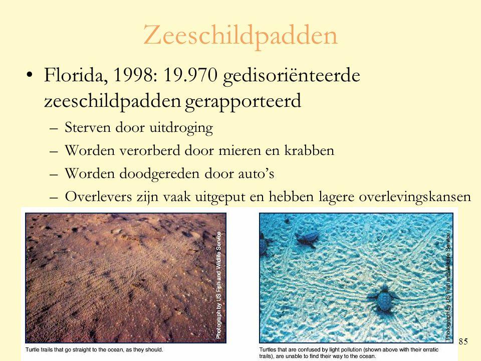 voorjaar 2009 Cursus kadervorming lichthinder 85 Zeeschildpadden Florida, 1998: 19.970 gedisoriënteerde zeeschildpadden gerapporteerd –Sterven door uitdroging –Worden verorberd door mieren en krabben –Worden doodgereden door auto's –Overlevers zijn vaak uitgeput en hebben lagere overlevingskansen