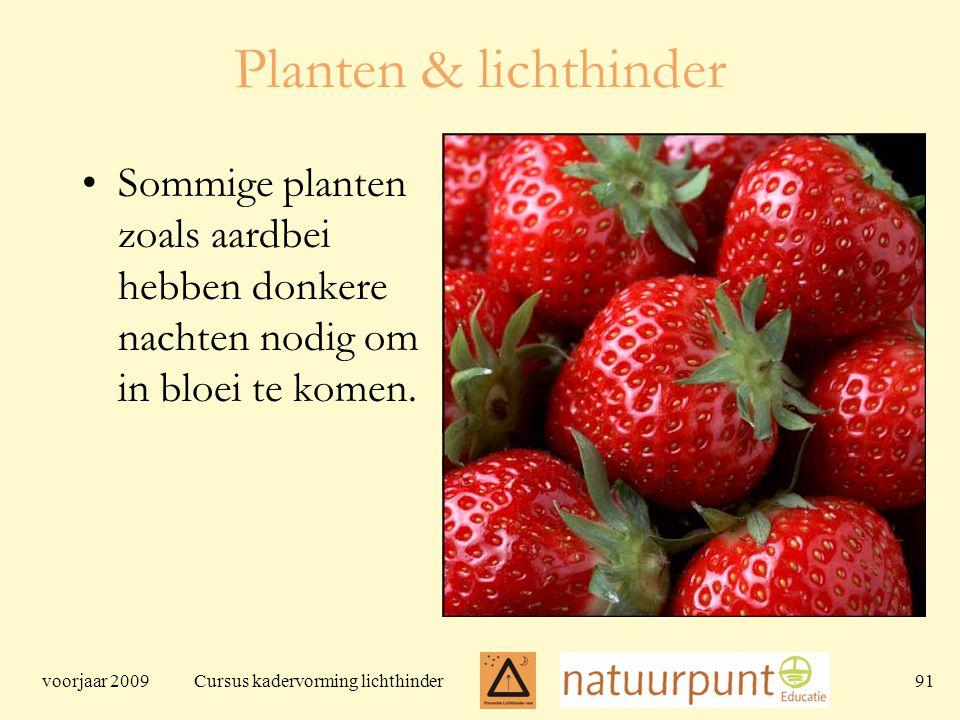 voorjaar 2009 Cursus kadervorming lichthinder 91 Planten & lichthinder Sommige planten zoals aardbei hebben donkere nachten nodig om in bloei te komen.