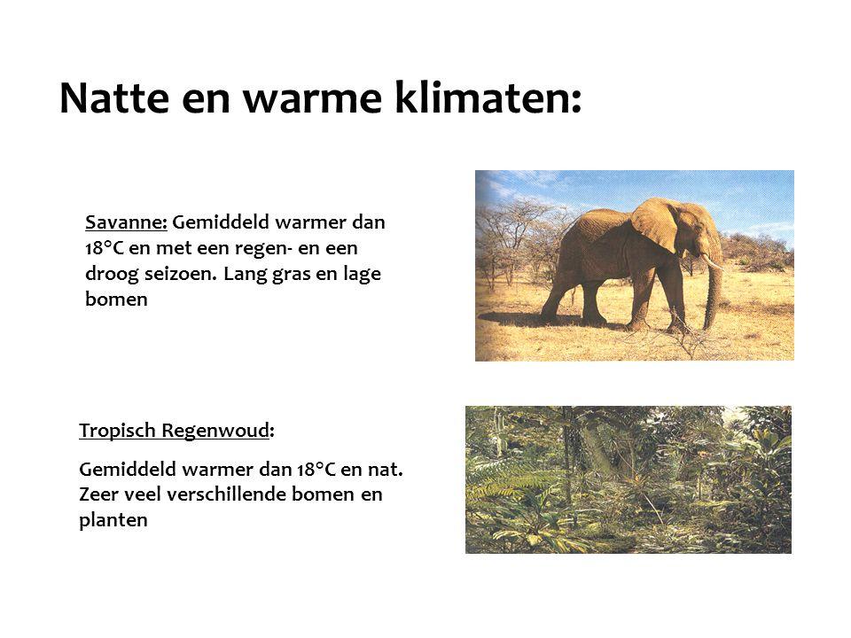 Tropisch Regenwoud: Gemiddeld warmer dan 18°C en nat. Zeer veel verschillende bomen en planten Savanne: Gemiddeld warmer dan 18°C en met een regen- en