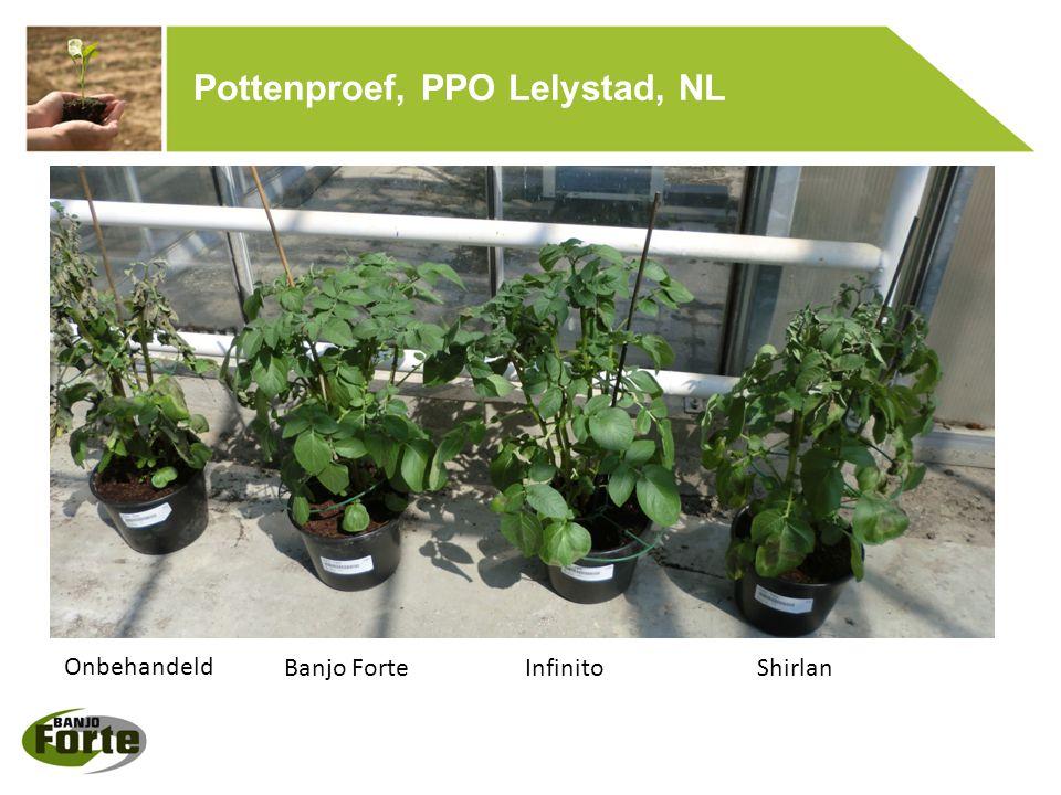 Pottenproef, PPO Lelystad, NL Onbehandeld Banjo ForteInfinitoShirlan