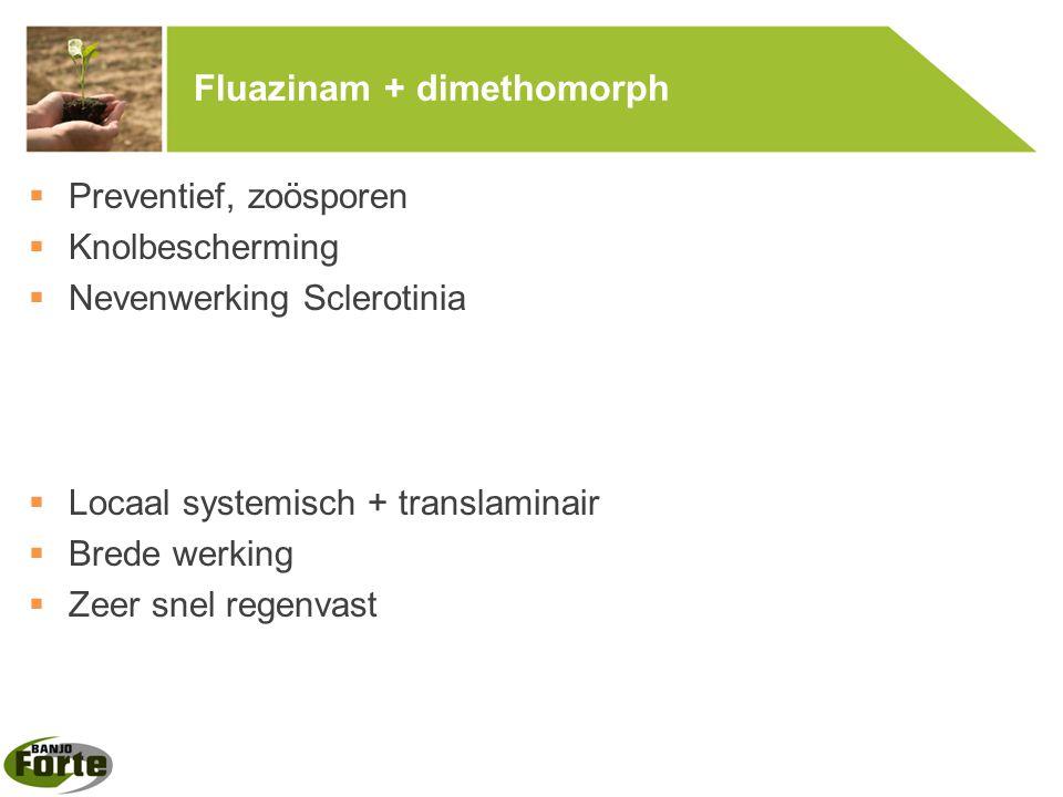 Fluazinam + dimethomorph  Preventief, zoösporen  Knolbescherming  Nevenwerking Sclerotinia  Locaal systemisch + translaminair  Brede werking  Ze