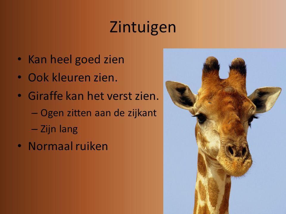Zintuigen Kan heel goed zien Ook kleuren zien.Giraffe kan het verst zien.