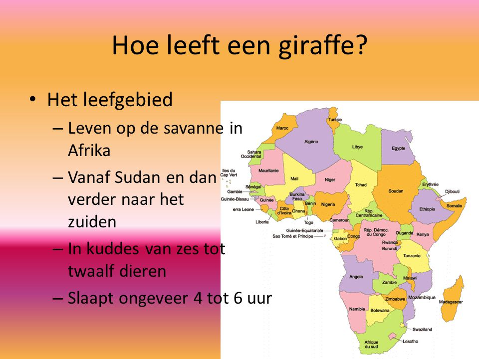 Hoe leeft een giraffe.