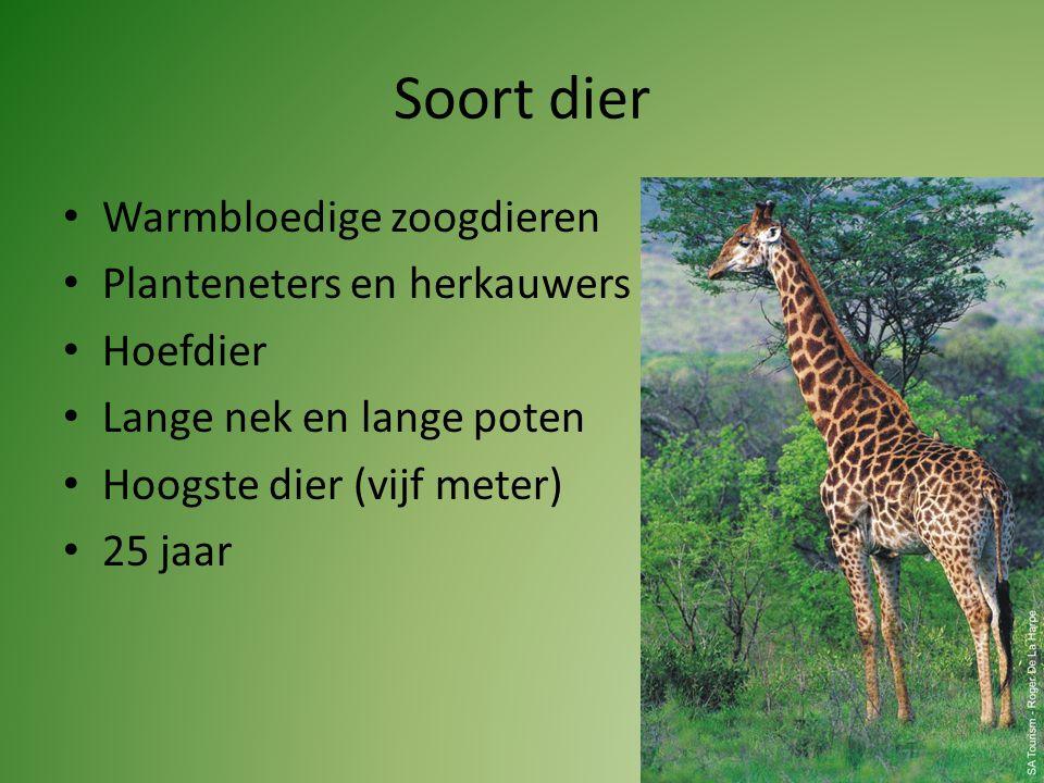 Soort dier Warmbloedige zoogdieren Planteneters en herkauwers Hoefdier Lange nek en lange poten Hoogste dier (vijf meter) 25 jaar