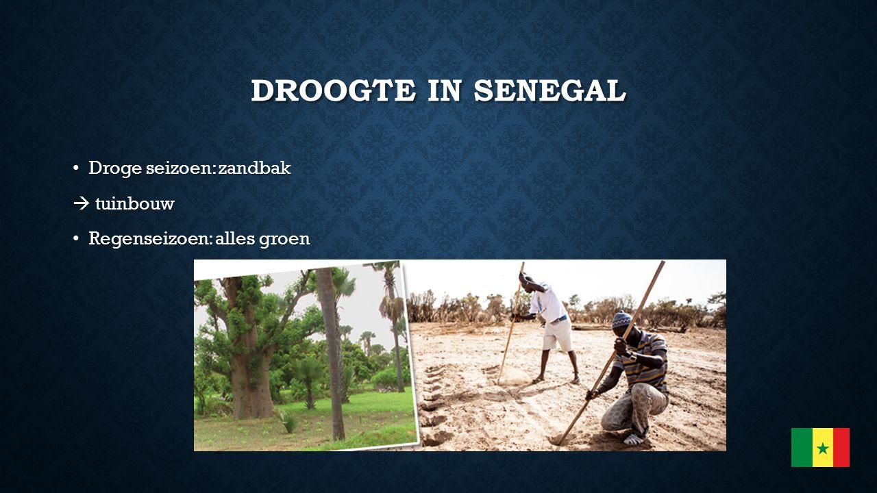DROOGTE IN SENEGAL Droge seizoen: zandbak Droge seizoen: zandbak  tuinbouw Regenseizoen: alles groen Regenseizoen: alles groen