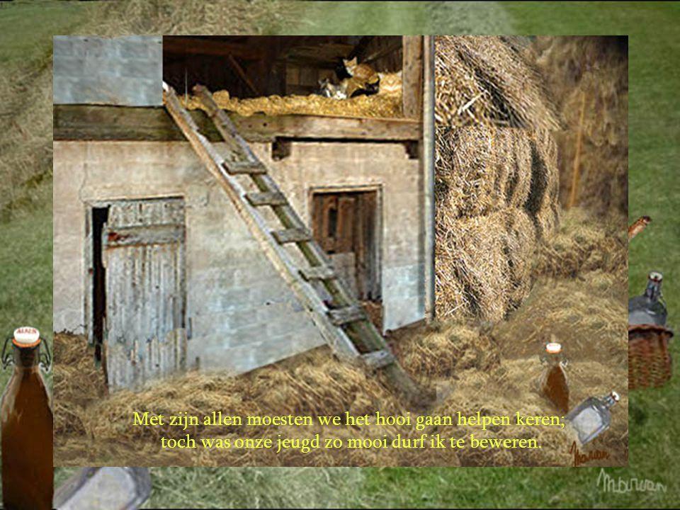 Bij het helpen van stro in schoven binden, kon men ons tijdens het verlof ook vinden.