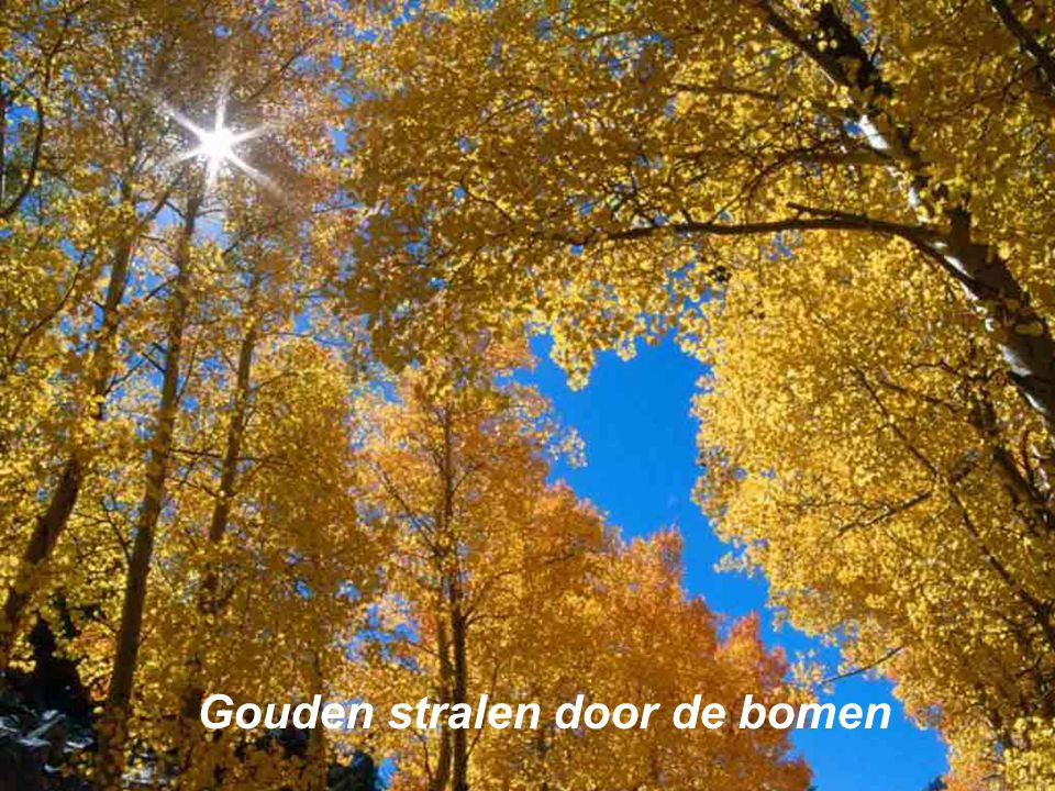 De Herfst Jeff's Power point voorstelling Music by Enya ; Calm Winds