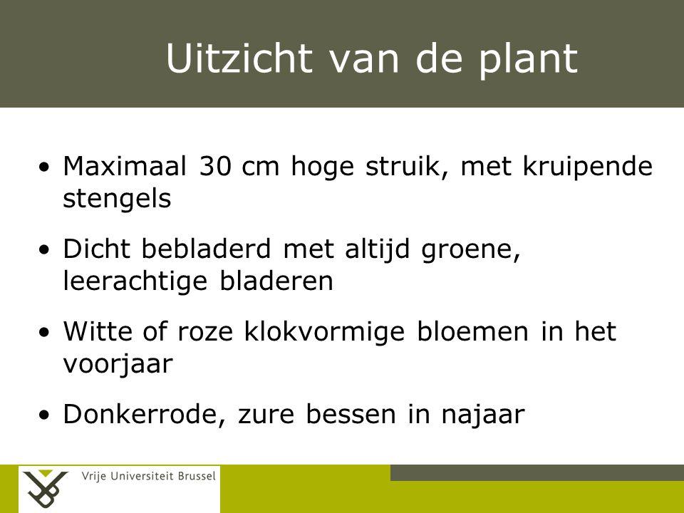 Pag. Uitzicht van de plant Maximaal 30 cm hoge struik, met kruipende stengels Dicht bebladerd met altijd groene, leerachtige bladeren Witte of roze kl