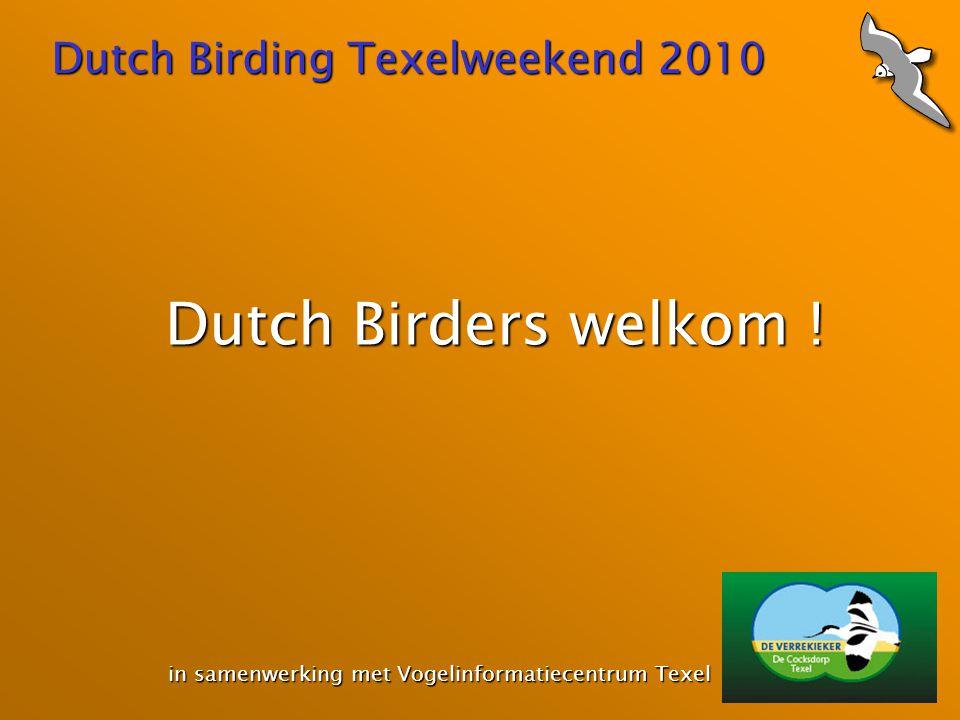 Dutch Birding Texelweekend 2010 Dutch Birders welkom ! in samenwerking met Vogelinformatiecentrum Texel in samenwerking met Vogelinformatiecentrum Tex