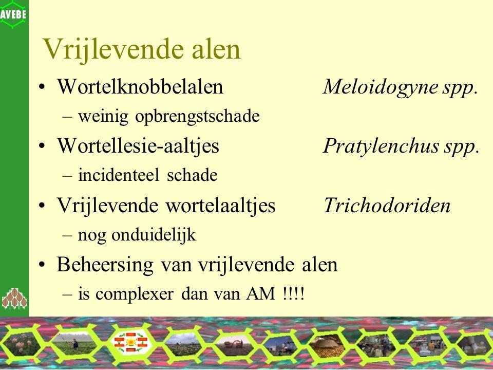 Vrijlevende alen Wortelknobbelalen Meloidogyne spp. –weinig opbrengstschade Wortellesie-aaltjes Pratylenchus spp. –incidenteel schade Vrijlevende wort