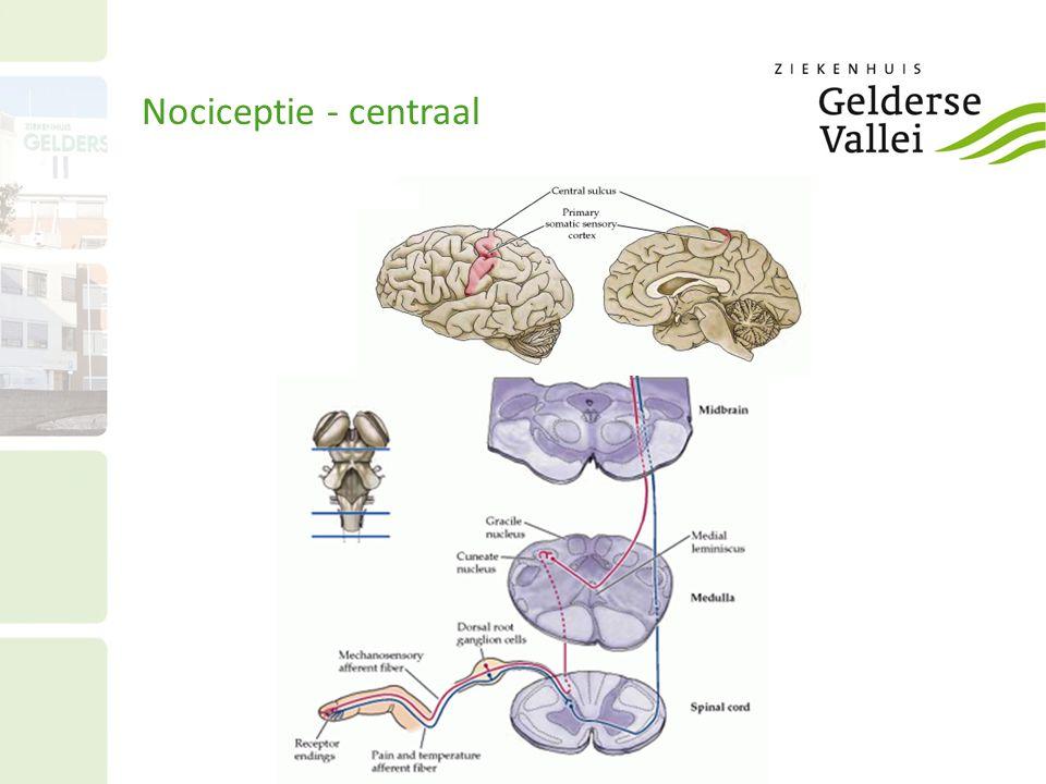 Nociceptie - centraal