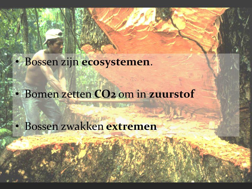 Bossen zijn ecosystemen. Bomen zetten CO2 om in zuurstof Bossen zwakken extremen