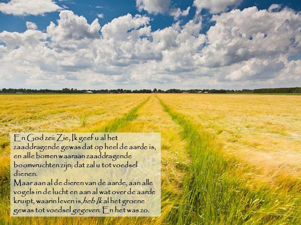 En God zei: Zie, Ik geef u al het zaaddragende gewas dat op heel de aarde is, en alle bomen waaraan zaaddragende boomvruchten zijn; dat zal u tot voed