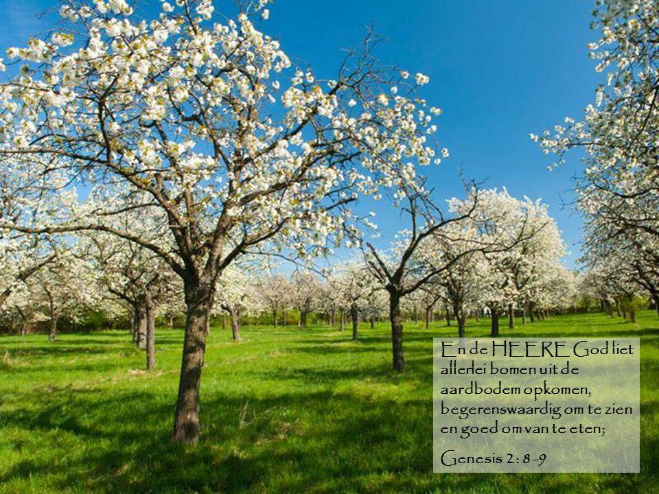 En de HEERE God liet allerlei bomen uit de aardbodem opkomen, begerenswaardig om te zien en goed om van te eten; Genesis 2: 8-9