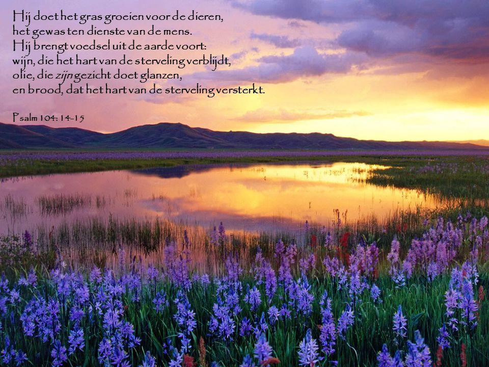 Hij doet het gras groeien voor de dieren, het gewas ten dienste van de mens. Hij brengt voedsel uit de aarde voort: wijn, die het hart van de sterveli