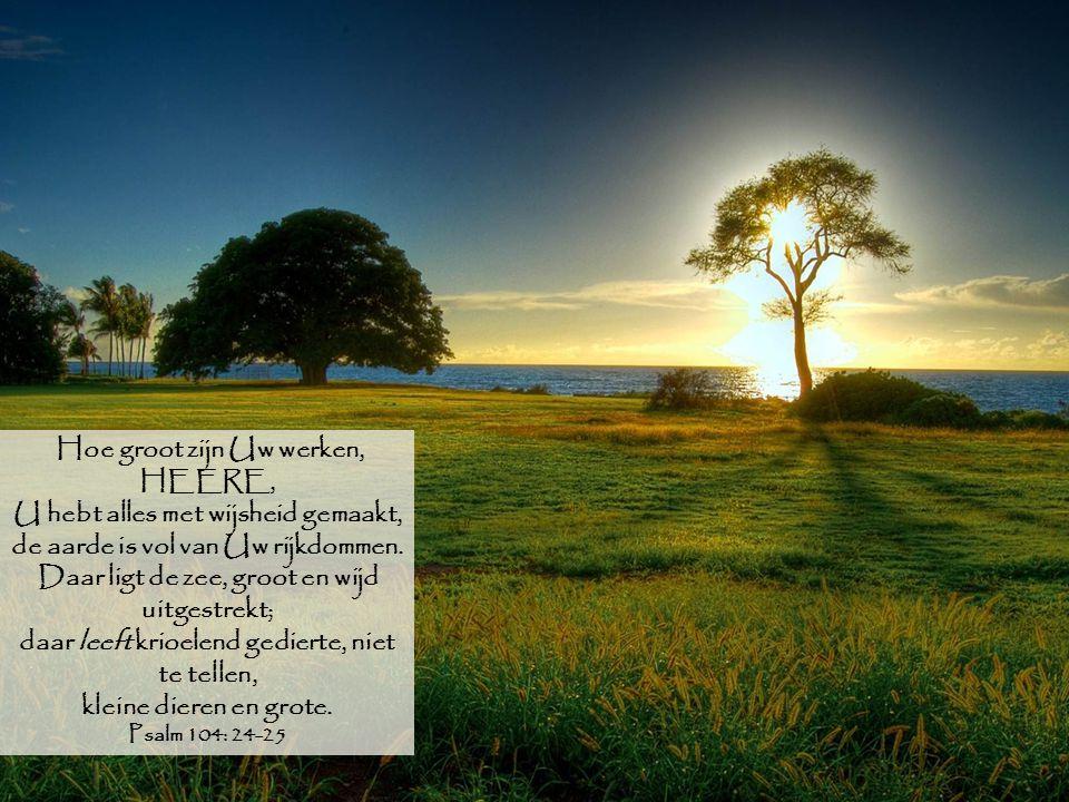 Hoe groot zijn Uw werken, HEERE, U hebt alles met wijsheid gemaakt, de aarde is vol van Uw rijkdommen. Daar ligt de zee, groot en wijd uitgestrekt; da