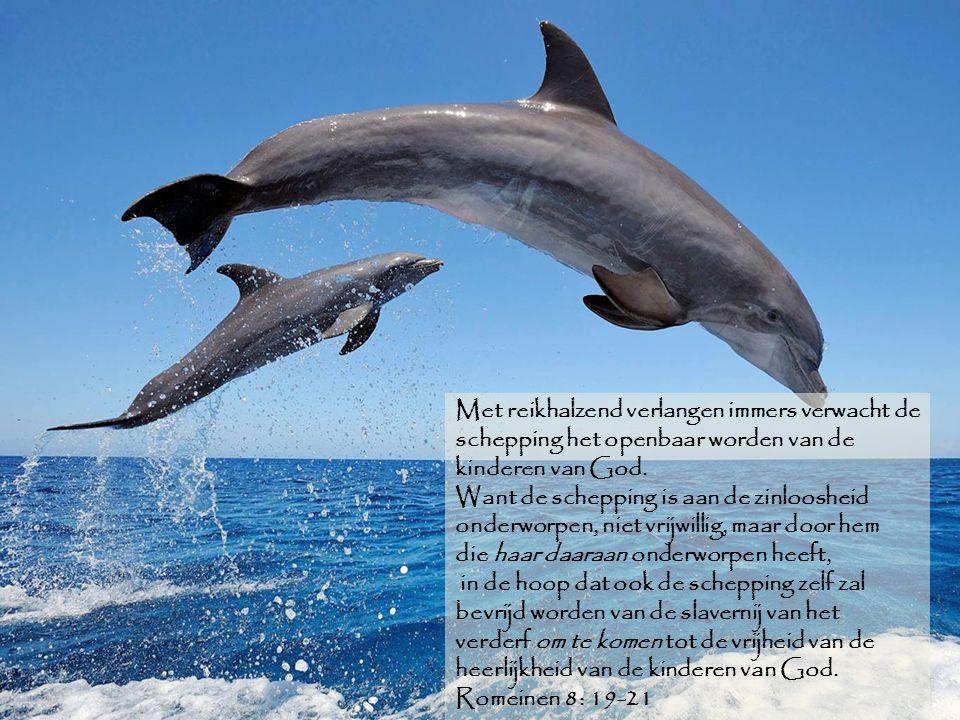 Met reikhalzend verlangen immers verwacht de schepping het openbaar worden van de kinderen van God. Want de schepping is aan de zinloosheid onderworpe