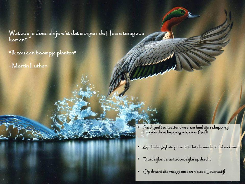Conclusie God geeft ontzettend veel om heel zijn schepping! Los van de schepping is los van God! Zijn belangrijkste prioriteit: dat de aarde tot bloei