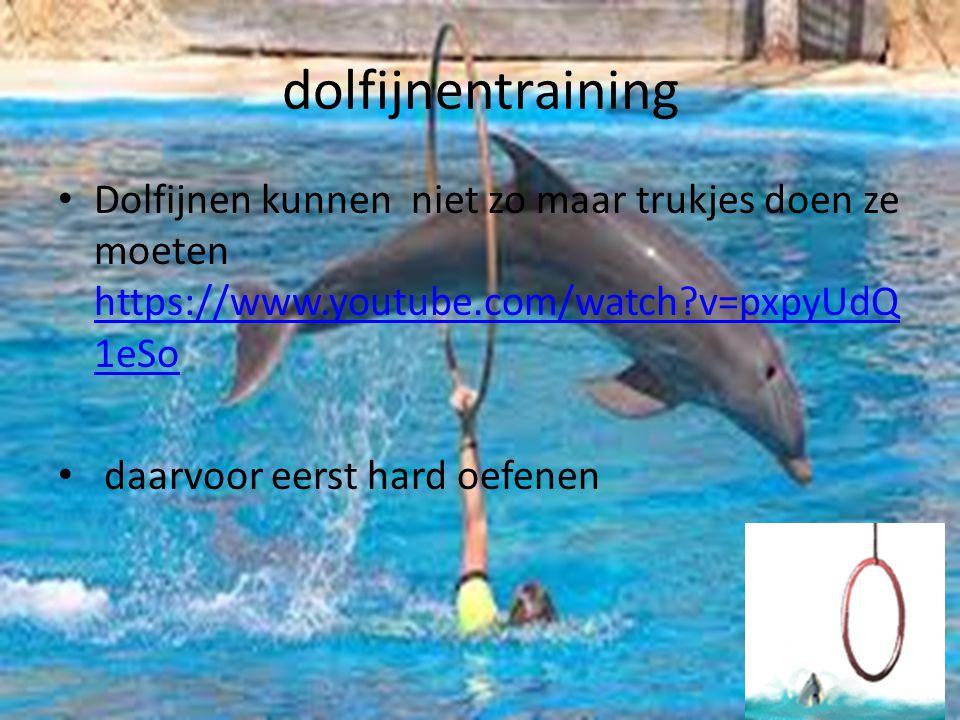Dolfijnen rassen De tuimelaar De gewone dolfijn De witte dolfijn en nog veel meer