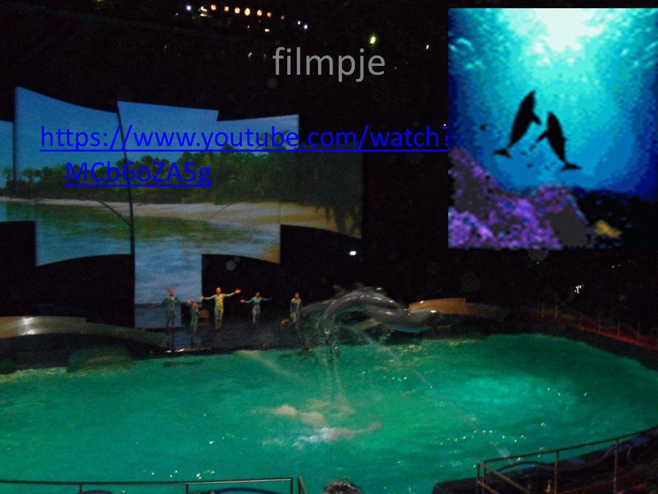 dolfijnentraining Dolfijnen kunnen niet zo maar trukjes doen ze moeten https://www.youtube.com/watch?v=pxpyUdQ 1eSo https://www.youtube.com/watch?v=pxpyUdQ 1eSo daarvoor eerst hard oefenen