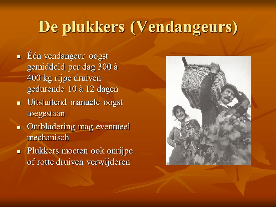 De plukkers (Vendangeurs) Één vendangeur oogst gemiddeld per dag 300 à 400 kg rijpe druiven gedurende 10 à 12 dagen Één vendangeur oogst gemiddeld per