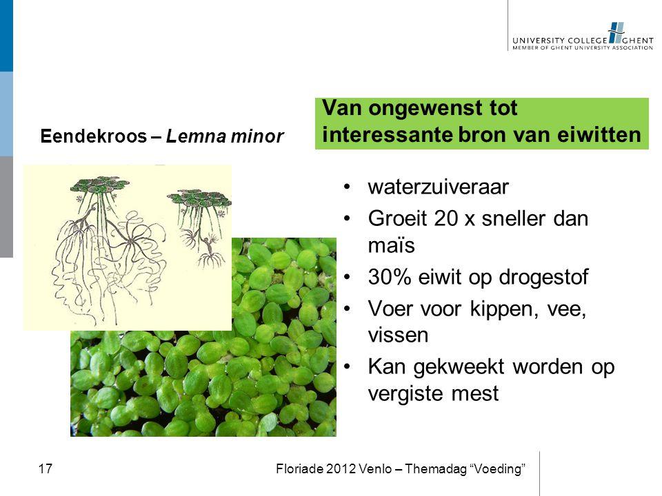 Eendekroos – Lemna minor Van ongewenst tot interessante bron van eiwitten waterzuiveraar Groeit 20 x sneller dan maïs 30% eiwit op drogestof Voer voor