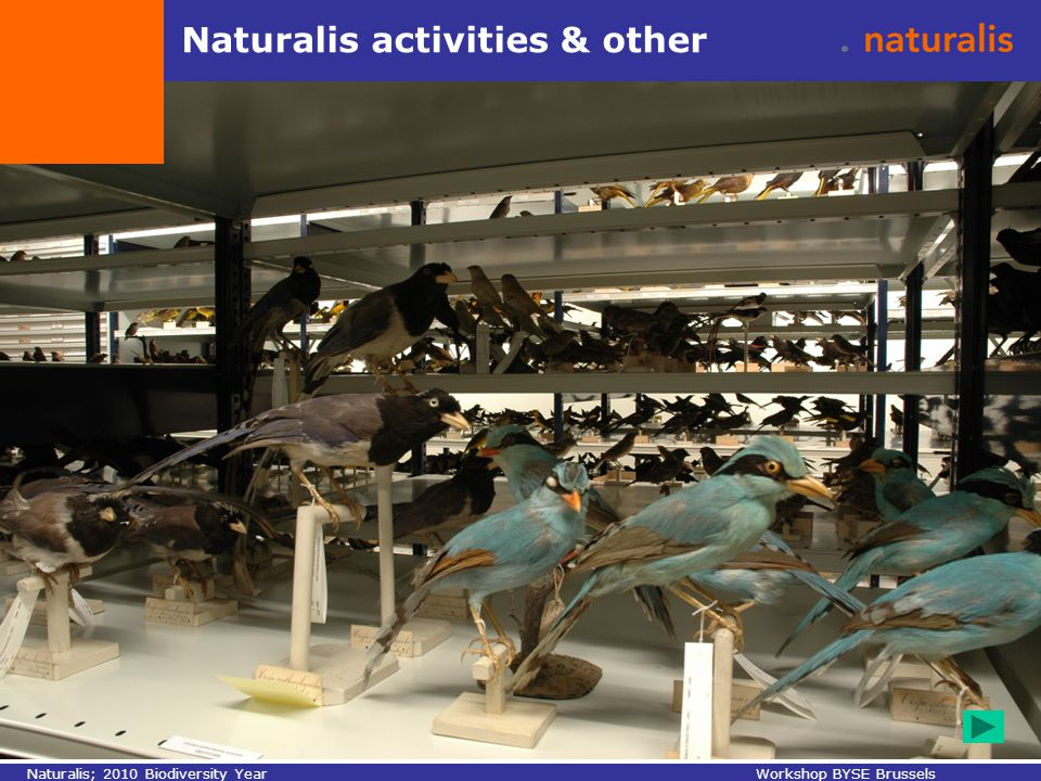 Naturalis activities & other Naturalis; 2010 Biodiversity YearWorkshop BYSE Brussels