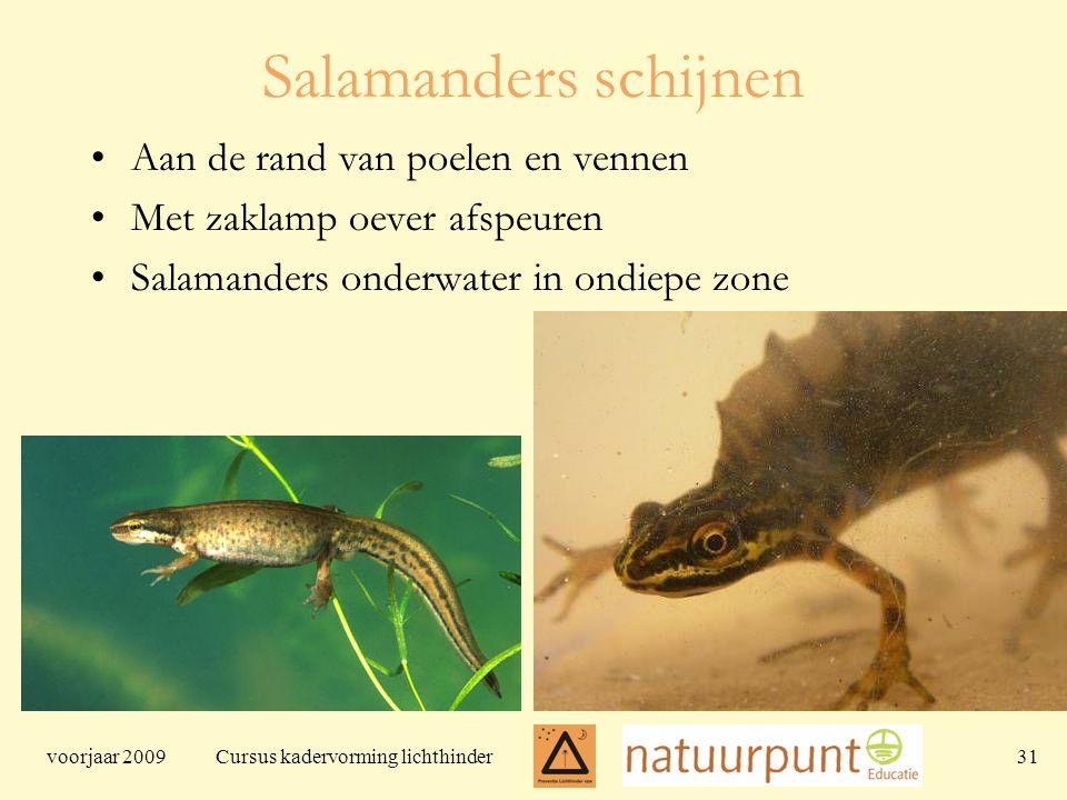 voorjaar 2009 Cursus kadervorming lichthinder 31 Salamanders schijnen Aan de rand van poelen en vennen Met zaklamp oever afspeuren Salamanders onderwater in ondiepe zone