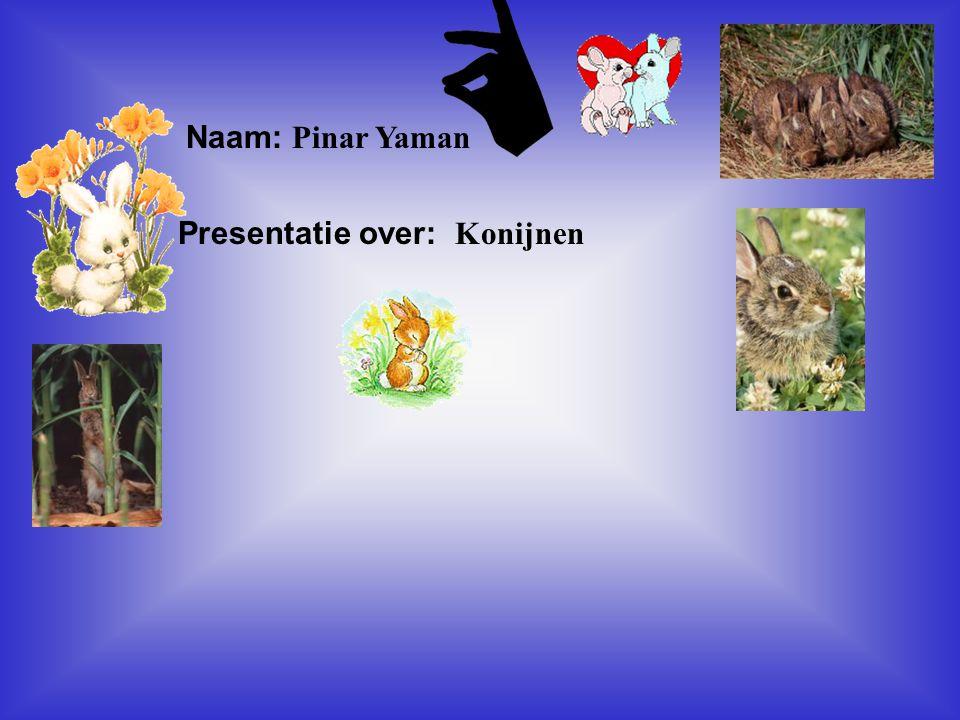 """Naam: Pinar Yaman Presentatie over: Konijnen Klik op """"Naam"""". Vul je naam in. Doe hetzelfde met """"hobby"""" Hier kun je een foto / tekening Invoegen"""