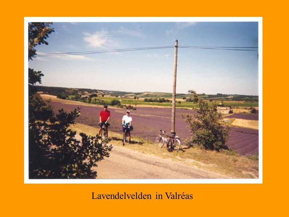 Lavendelvelden in Valréas