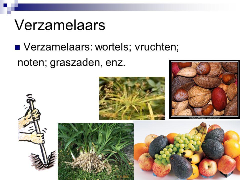 Verzamelaars Verzamelaars: wortels; vruchten; noten; graszaden, enz.