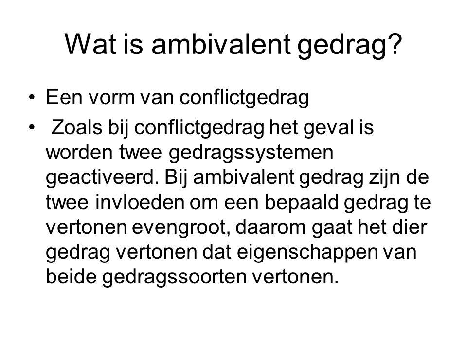 Wat is ambivalent gedrag? Een vorm van conflictgedrag Zoals bij conflictgedrag het geval is worden twee gedragssystemen geactiveerd. Bij ambivalent ge