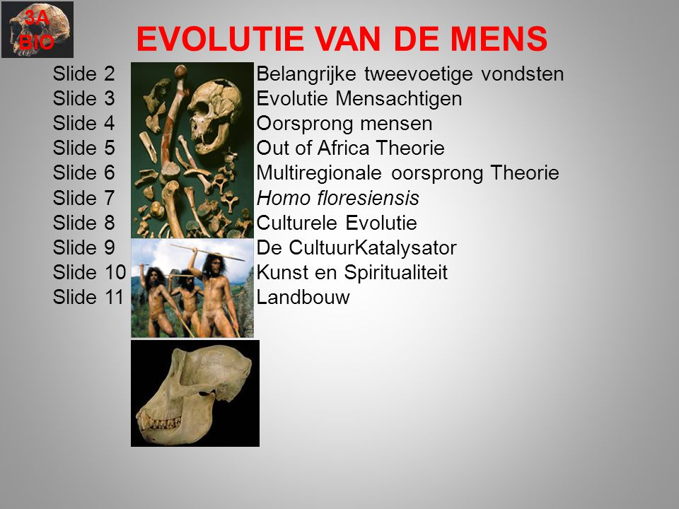 EVOLUTIE VAN DE MENS Slide 2Belangrijke tweevoetige vondsten Slide 3Evolutie Mensachtigen Slide 4 Oorsprong mensen Slide 5 Out of Africa Theorie Slide