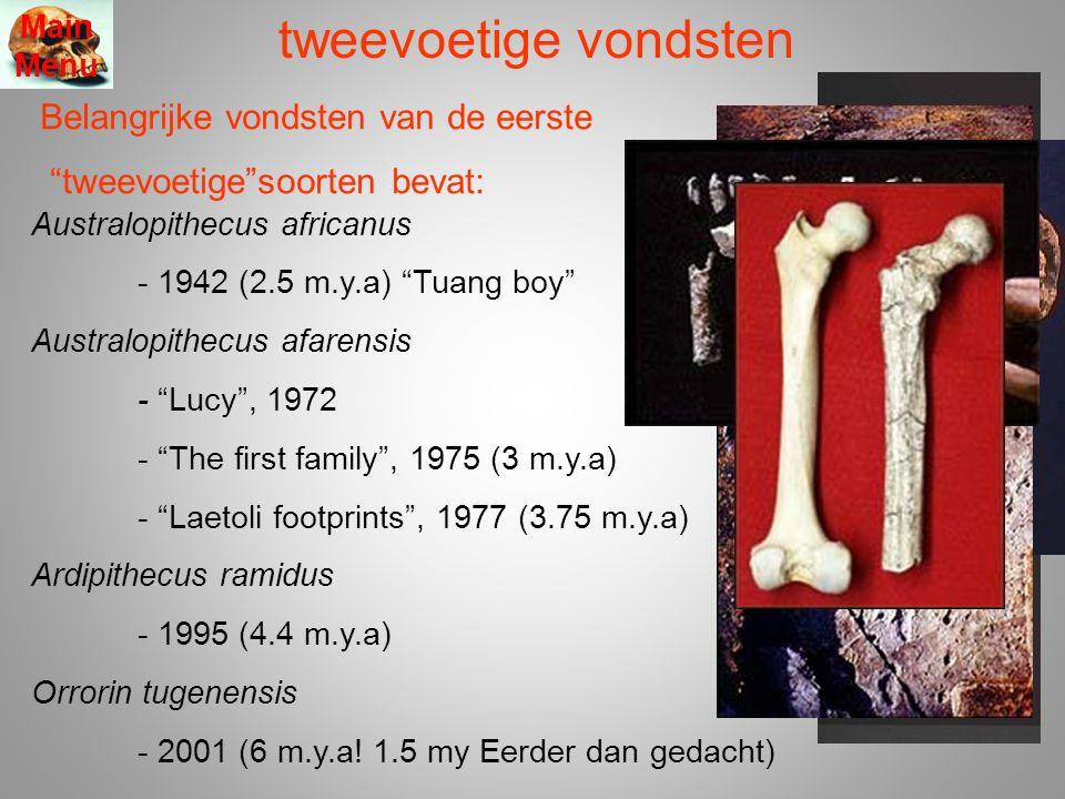 tweevoetige vondsten Belangrijke vondsten van de eerste tweevoetige soorten bevat: Main Menu Australopithecus africanus - 1942 (2.5 m.y.a) Tuang boy Australopithecus afarensis - Lucy , 1972 - The first family , 1975 (3 m.y.a) - Laetoli footprints , 1977 (3.75 m.y.a) Ardipithecus ramidus - 1995 (4.4 m.y.a) Orrorin tugenensis - 2001 (6 m.y.a.