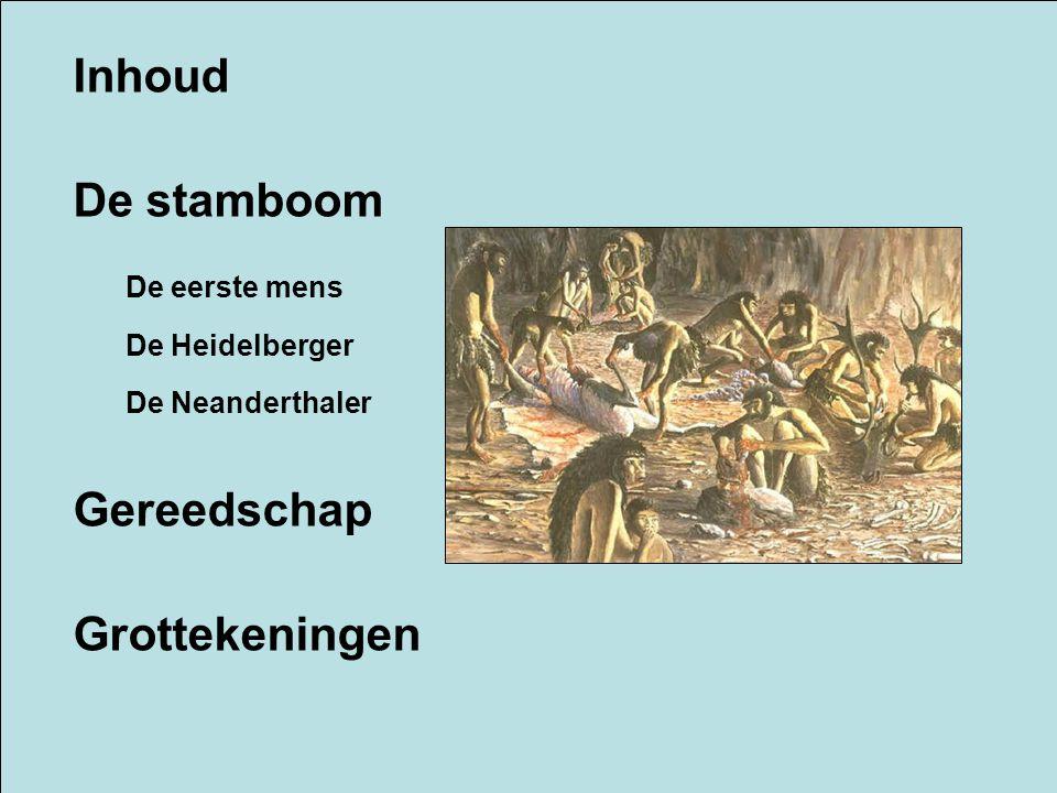 Inhoud De stamboom De eerste mens De Heidelberger De Neanderthaler Gereedschap Grottekeningen