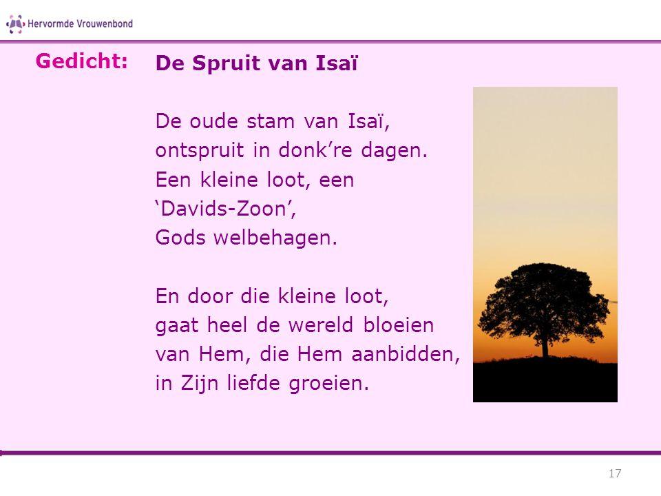 De Spruit van Isaï De oude stam van Isaï, ontspruit in donk're dagen. Een kleine loot, een 'Davids-Zoon', Gods welbehagen. En door die kleine loot, ga