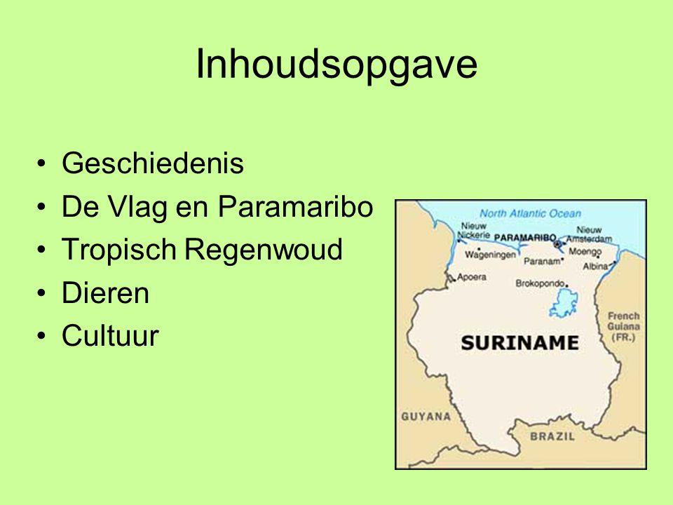 Inhoudsopgave Geschiedenis De Vlag en Paramaribo Tropisch Regenwoud Dieren Cultuur