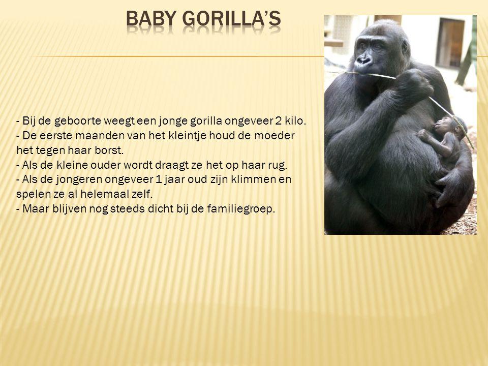  Mijn moeder had zo maar een boekje over gorilla's voor mij gekocht.