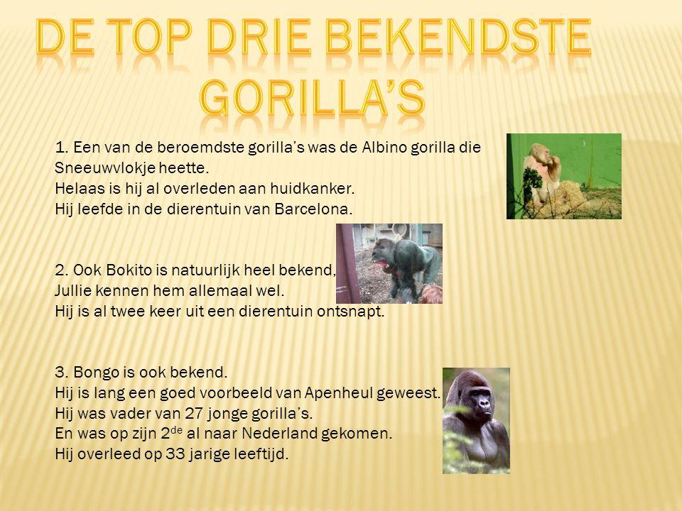 Een volwassen gorilla kan iedere dag wel 30 kilogram eten. Ze zijn planteneters. Ze eten stekelige planten, bamboe, distels, bladeren, stengels, schor