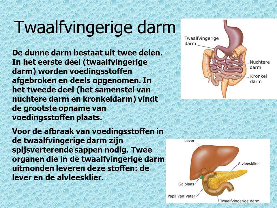 Nuchtere darm en Kronkel darm De nuchtere darm en de kronkeldarm zijn belangrijke onderdelen van het spijsverteringskanaal.