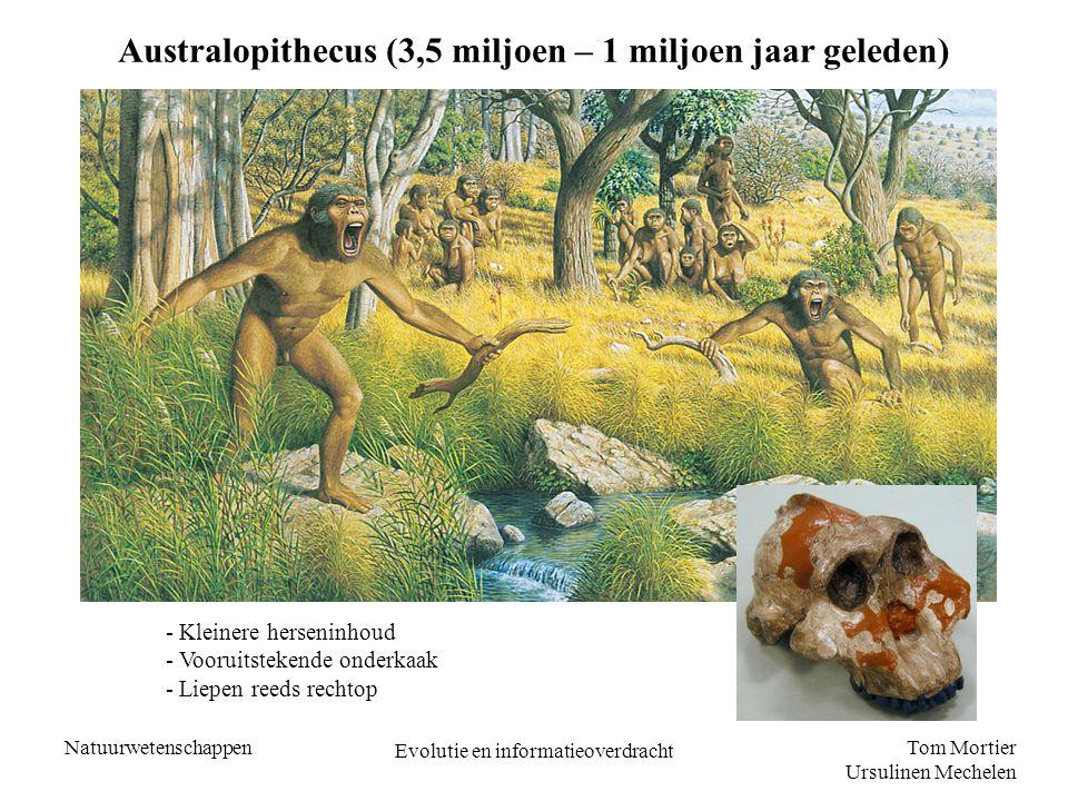 Tom Mortier Ursulinen Mechelen Natuurwetenschappen Evolutie en informatieoverdracht Opmerking – Sahelanthropus Tchadensis - Opgraving in 2002 in Tsjaad - 6,5 miljoen jaar oud (=oudste menselijk fossiel) Nature,Vol.