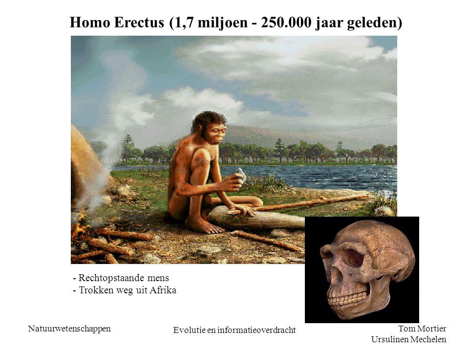 Tom Mortier Ursulinen Mechelen Natuurwetenschappen Evolutie en informatieoverdracht OUT OF AFRICA – THEORIE Homo Erectus trok weg uit Afrika en vestigde zich in Europa en Azië